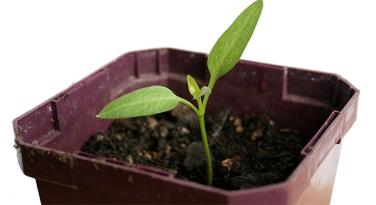 brote germinado sentido y sostenibilidad