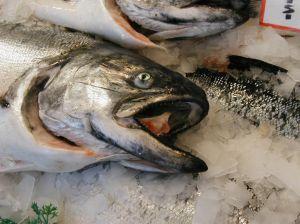 salmón