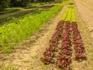 organicsalad