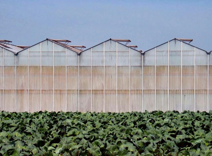 greenhouses-1561319